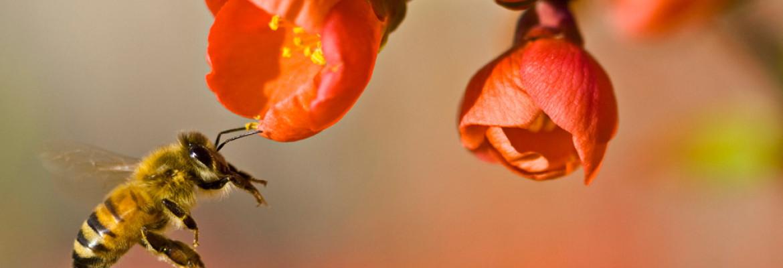 Homeopathie is een natuurlijke geneeswijze